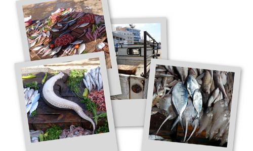 bouharoun-poissons-b.jpg