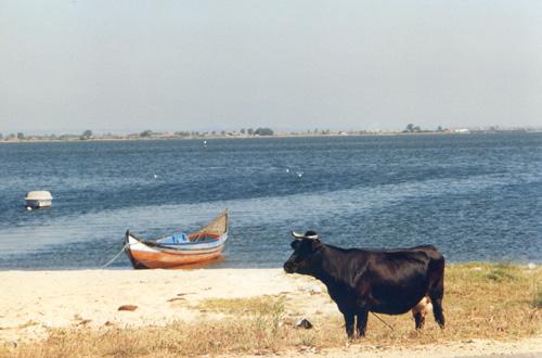 port 12 barca vaca 1995 po